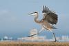 Birds-BHDance1017