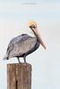 Birds-PeliWU2V