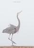 Birds-BHDanceV1217