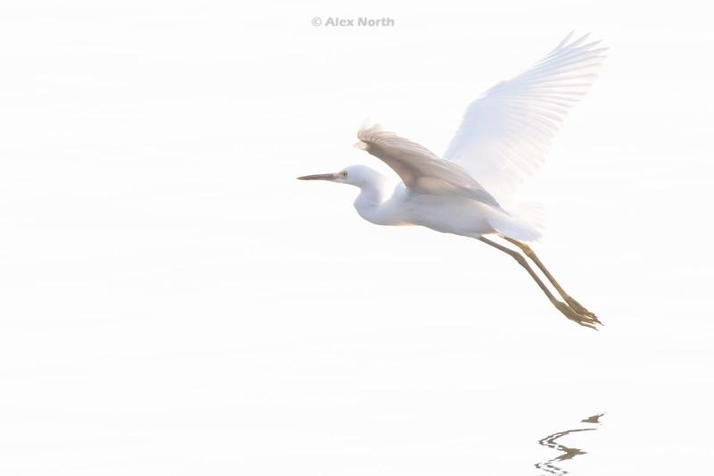 Birds-SWFLT1