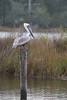 Birds-PelGINSV