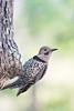 Birds-WPNF