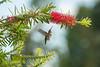 hummingbird092610_4 jpg