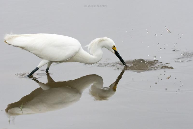 Birds-SWMINNOW