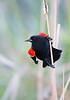 Birds-RWBB2