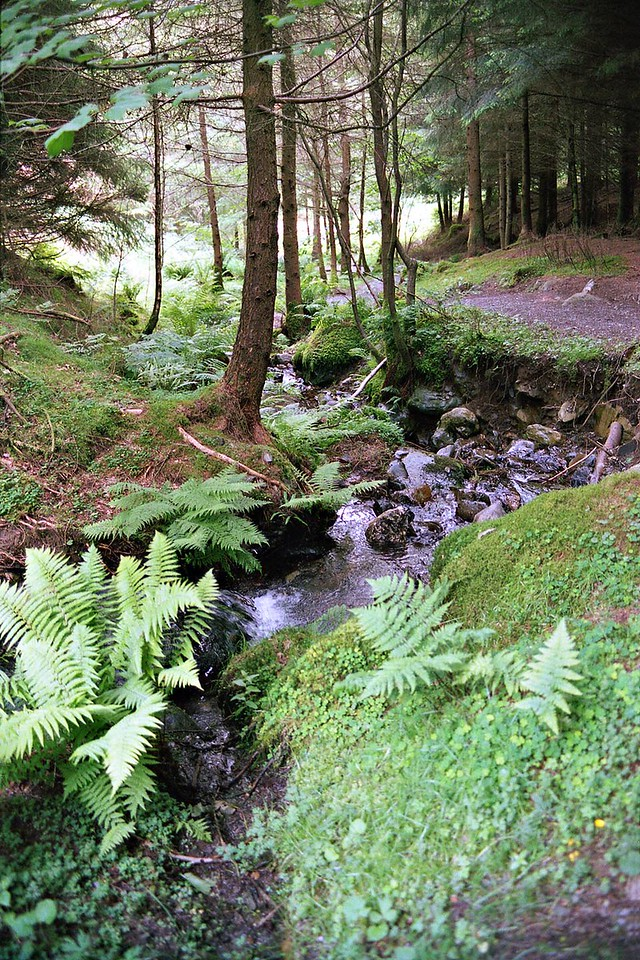 Beck In Whinlatter Forest Park