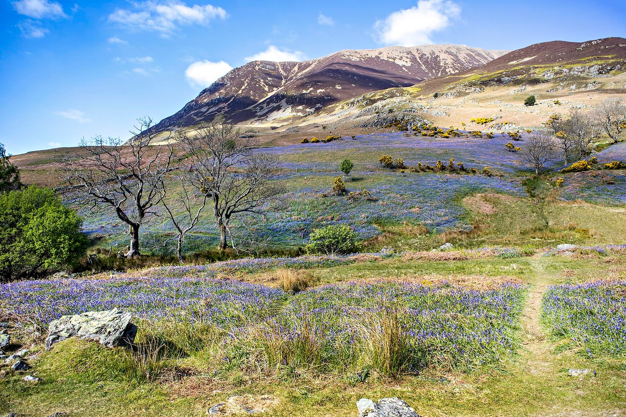Mon 8th May : Rannerdale : Grasmoor