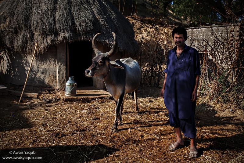 Gujjar at work in yard of his hut in Thar Desert. Buy Prints online