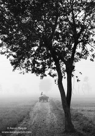 Back to work and fog Order fine art prints online, ships from America to  whole world. Click yellow buy button  You can purchase print of this picture through this website, which serves as online art auction ships across the world. Makes excellent gift for your loved ones. Money back guarantee