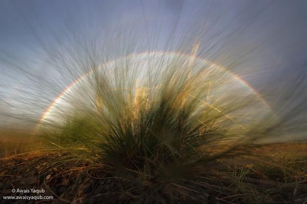 Iris or just a rainbow art