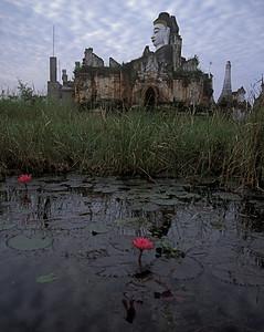 Lilies and the Buddha - Myanmar