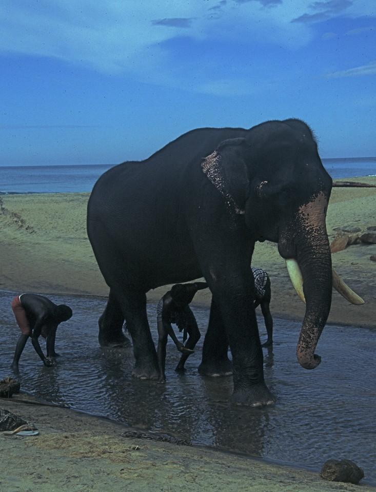 """""""Washing your Elephant"""" - Southern India"""