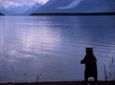 """What's Out There?"" - Katmai National Park"
