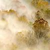 Foggy Autumn - 2010