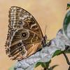 Natural History Museum Butterflies, DC - 2015