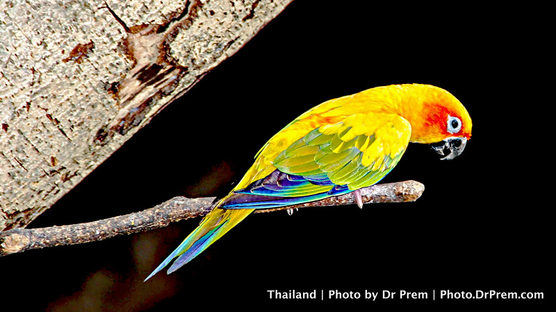 Unleash Your Charm In Full Color--Ode To The Parrot