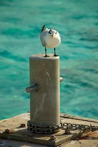 Seagul on Land