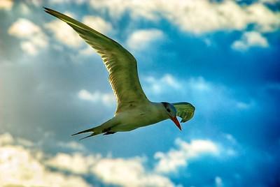 Seagul in air