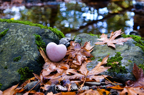 Fall and Love