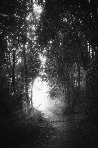 Walk Through Rain V (Joy)