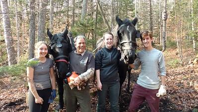 Horse Logging