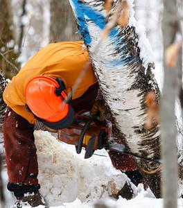 Woodsplitting, Sugarbush Pruning, Math Class