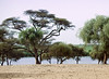 Water and Trees, Desert near Podor, Senegal