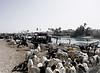 Goats at the River Market, Langue de Barbarie, St. Louis, Senegal