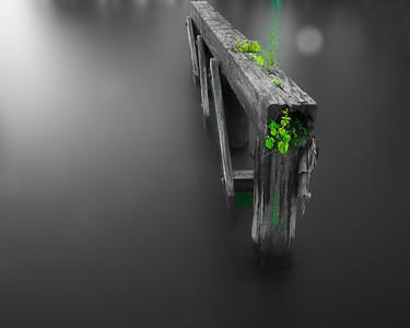 Pilings- Green- Focus- 5125