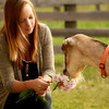 The goat gets the flowers