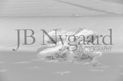 2-07-18 Lani Bischoff - winter Senior Pictures-286