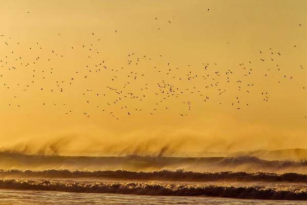 Flights of birds at Sennen, Cornwall