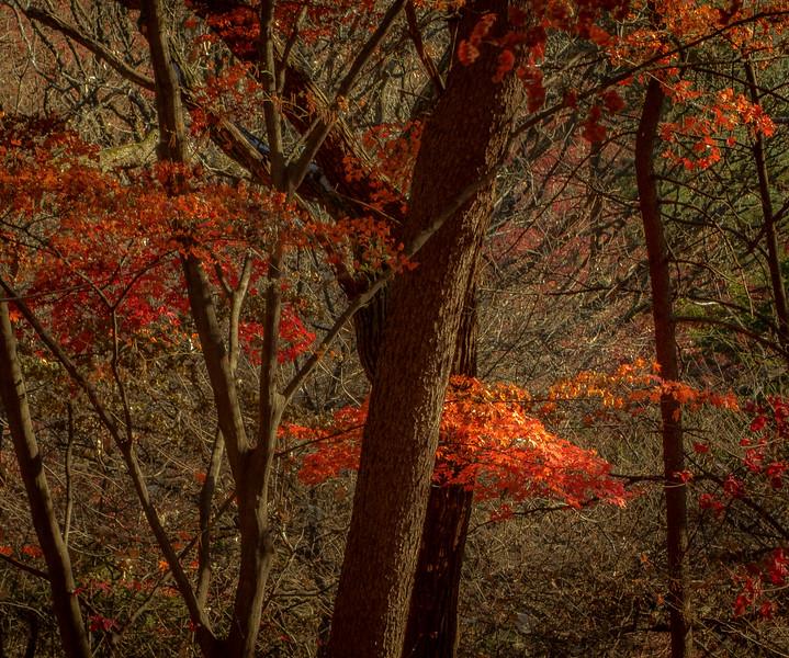 Autumn Color – Huwon Garden