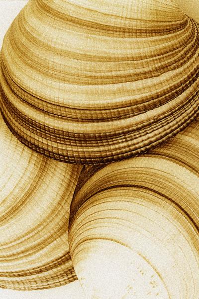 Venus Shells