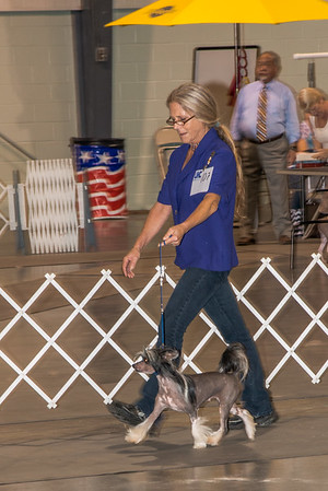 Sept 2016 Labor Day Dog Show