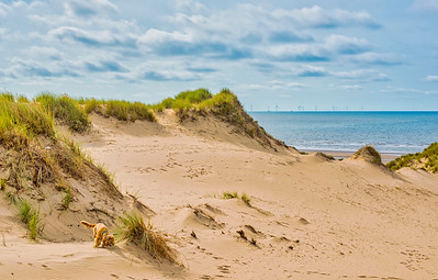 On  The  Dunes!
