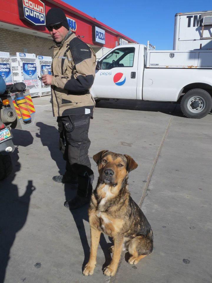 Stray dogs literally roam the street in Browning, MT.  It's an Indian reservation town and, frankly, a total shithole.