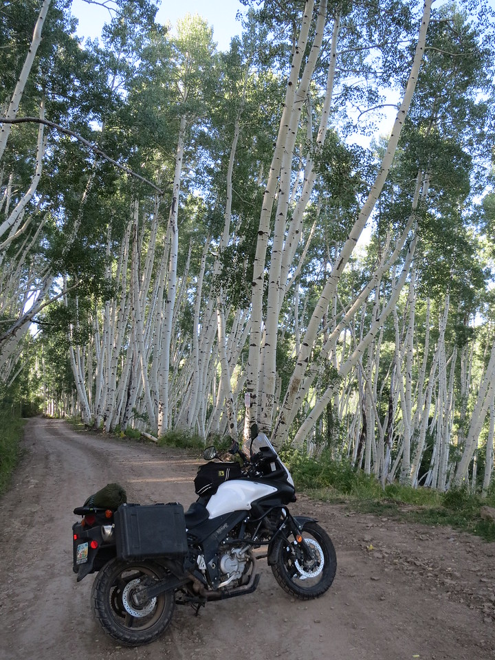 Day 5 (896 miles):  Last Dollar Road, near Telluride.   Numerous Birch tree groves.
