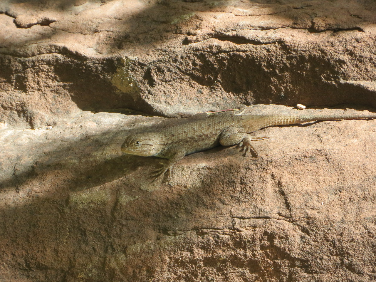 Day 5 (896 miles):  CO 141 / The Unaweep-Tabeguache Byway.  I stopped at a natural spring and shared a rock with this little dude.