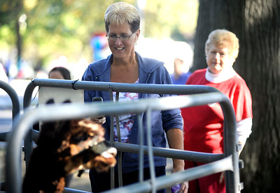 9/24/2016 Mike Orazzi | Staff Debbie Cudney attempts to photograph an alpaca during the Bristol Mum Festival on Saturday on Memorial Blvd.