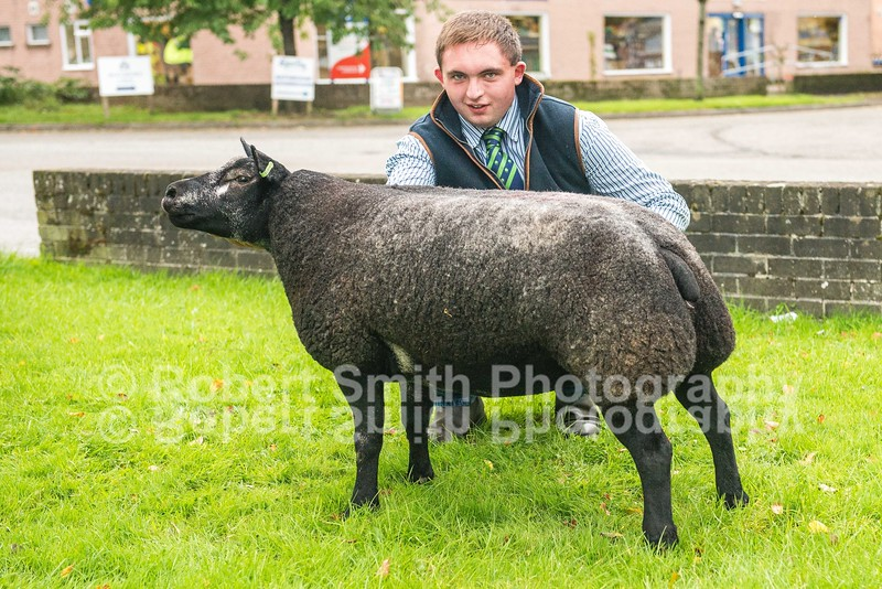 Shearling Gimmer lot 621 from H Jewitt sold for 2000 gns (top price)