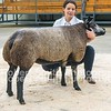 Shearling Gimmer lot 654 from S Moyse sold for 1400 gns (second top price)
