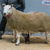 Lot 36 - 2 Shear from Newbank sold for £8000