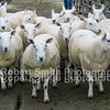 Top price NCC (Hill) Gimmers sold for £165 per head