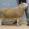 Champion from Hethpool sold for £2800