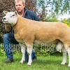 Lot 228 Shearling Ram sold for 5800