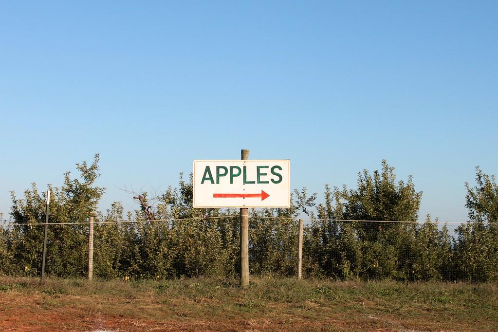 Apple orchard in Virginia