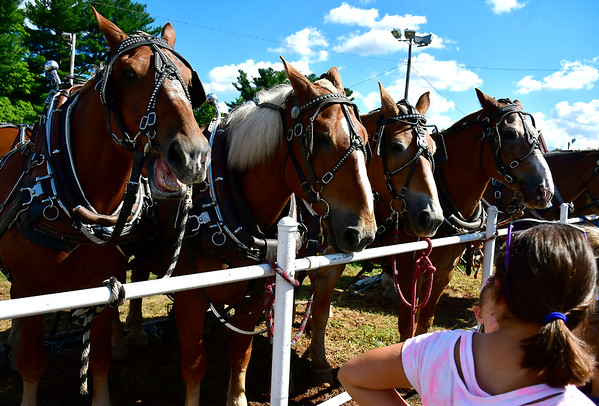 9/15/2018 Mike Orazzi   Staff Draft horses during the 70th annual Berlin Fair on Saturday.