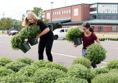 09/19/18  Wesley Bunnell | Staff  NBHS Seniors Zoe Hyres-Buley, L, and Leah Gaffney help organize Mums for pickup by customers of their 2018 Marching Band Mum Sale. The profits of the sale help offset the cost of their performances for the band, choir and orchestra at Disney World in February 2019.  Donations can also be made through band Director Justin Carlin at the high school.