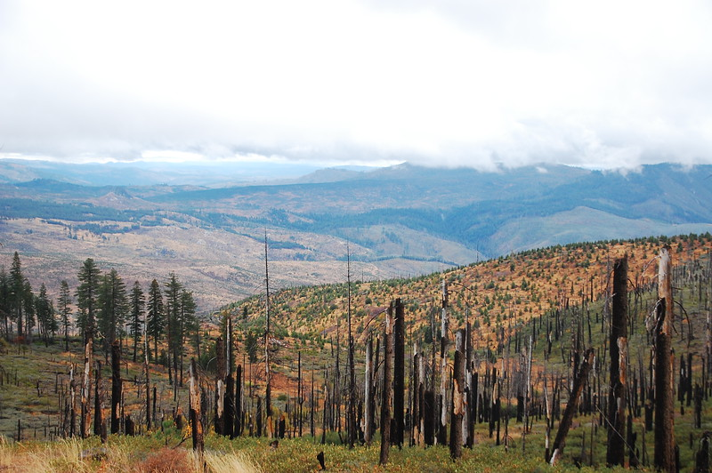 Site of an old forest fire near Susanville.